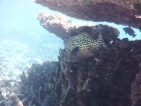 blog Coral Bay (13)