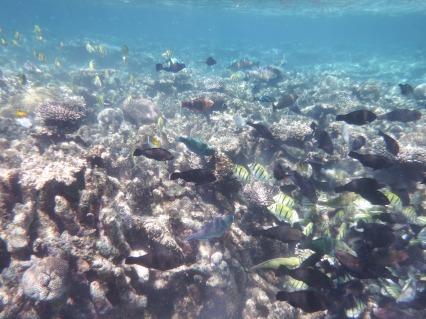 blog Coral Bay (14)