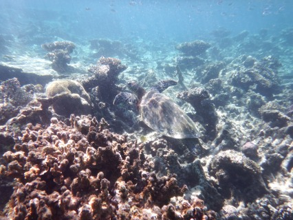 blog Coral Bay (16)