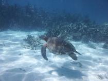 blog Coral Bay (17)