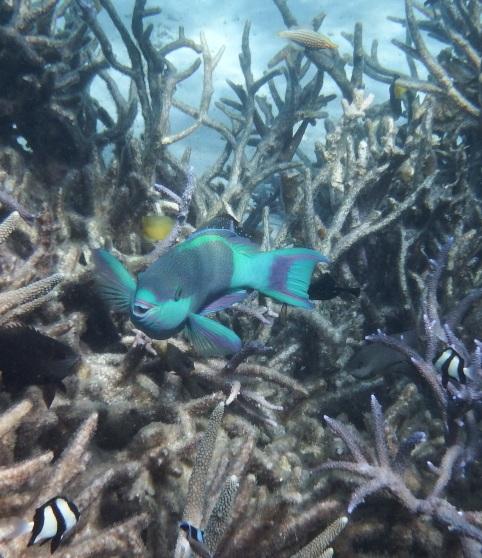 blog Coral Bay (18)