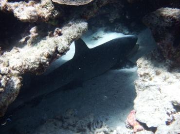 blog Coral Bay (8)