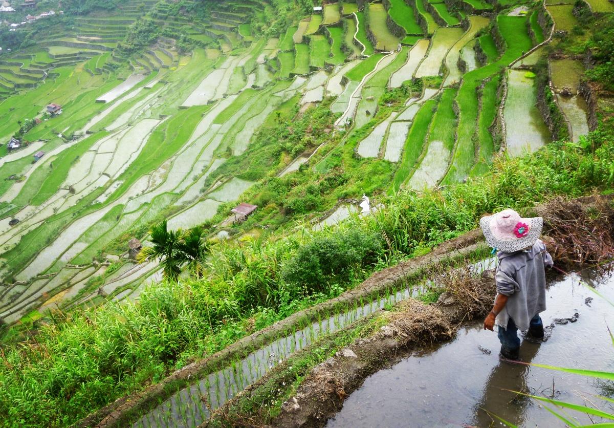 Le nord de Luzon et ses rizières en terrasse